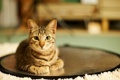 Картинка кошка, дом, комната, круг, лежа
