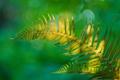 Картинка природа, растение, лист