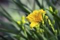 Картинка цветок, макро, природа