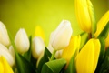 Картинка листья, цветы, желтые, тюльпаны, белые, бутоны