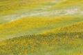Картинка поле, пейзаж, цветы, подсолнух