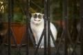 Картинка кошка, глаза, кот, фон