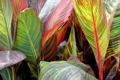 Картинка листья, макро, рендеринг, растение
