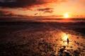 Картинка море, пляж, небо, золотой