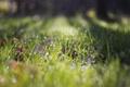 Картинка зелень, трава, капли, боке