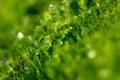 Картинка зелень, трава, капли, макро, роса, воды