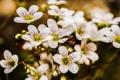 Картинка макро, цветы, фото, весна