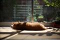 Картинка кот, стекло, рыжий, лежит