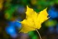 Картинка осень, жёлтый, яркий, лист, макро, цвет