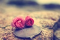 Картинка фон, обои, настроения, роза, лепестки, зеркало