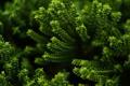 Картинка зелень, макро, растение