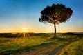 Картинка поле, солнце, лучи, дерево