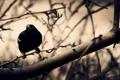 Картинка птица, ветки, дерево