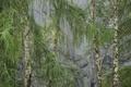 Картинка лес, деревья, скала, роща