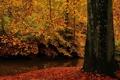 Картинка осень, вода, природа, дерево, листва, ствол