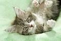Картинка кот, глаза, маленький, мордочка, пушистик, котёнок, усы