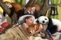 Картинка животные, игрушки, сон, арт, девочка, мухоморы, панды