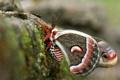 Картинка бабочка, камень, крылья, мотылек