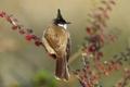 Картинка птица, ветка, клюв, хвост