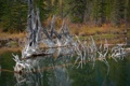 Картинка лес, вода, природа, озеро, гладь, дерево, сухое