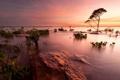 Картинка деревья, пейзаж, закат, озеро
