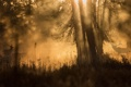 Картинка туман, утро, олени