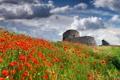 Картинка поле, небо, трава, природа, замок, маки, nature
