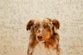 Картинка фон, собака, очки