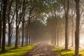 Картинка дорога, осень, природа, роса, утро, алея