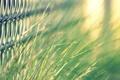 Картинка зелень, трава, макро, сетка, сталь, сеть, фокус