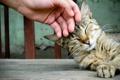 Картинка кошка, обои, ласка