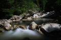 Картинка лес, ручей, камни, поток