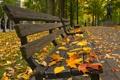 Картинка осень, парк, листва