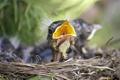 Картинка природа, птица, гнездо