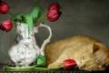 Картинка тюльпаны, кошка, стиль