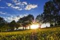 Картинка парки, трава, дерево, деревья, пейзажи, свет, лучи