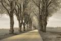 Картинка Трава, Дорога, Деревья, Лес, Природа, Пейзаж, Поле