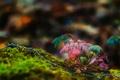 Картинка лес, макро, природа, растение