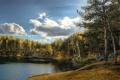Картинка лес, пейзаж, природа, озеро