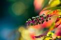 Картинка растение, блики, яркие, природа, цвета, боке