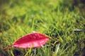 Картинка трава, макро, фото, листик