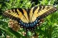 Картинка пятна, парусник, полоски, бабочка, цветы