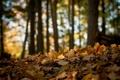 Картинка лес, природа, блики, листва
