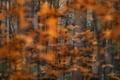 Картинка природа, лес, осень