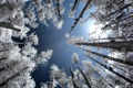 Картинка иней, лес, небо, деревья, Infrared