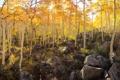 Картинка осень, деревья, камни, склон, осина