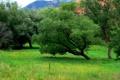 Картинка трава, деревья, горы, сша, Colorado Springs, Red Rock Canyon