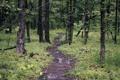 Картинка лес, деревья, природа, тропинка