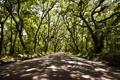 Картинка дорога, солнце, деревья, ветки, тень
