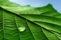 Картинка листья, капли, макро, фотографии, green macro, обои для рабочего стола